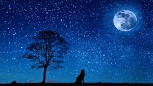 Night sky, wolf