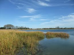 Marine Pk Marsh