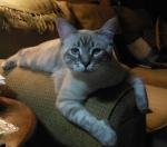P Meyers Cat