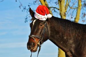 Xmas horse in hat