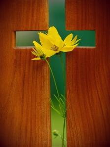 cross, daffodill