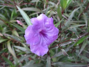 Flower, my backyard