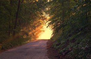 A path sunny