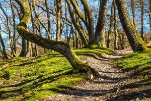 A path trees