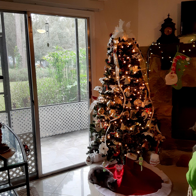 A Green Tree Xmas 12.20