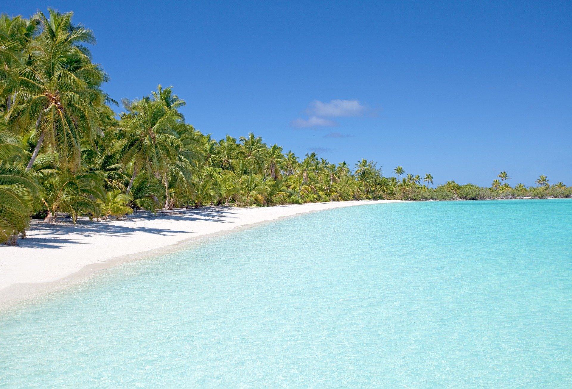 A palm tree beach